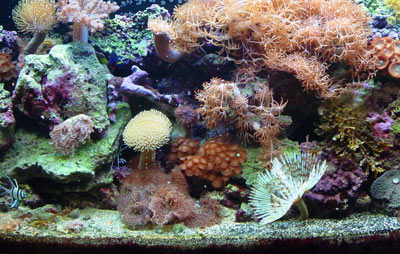 Our reef aquarium after 1 year