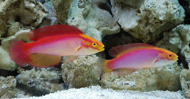 Five Fantastic Foods for your Wrasse