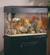 How to Choose the Right Aquarium