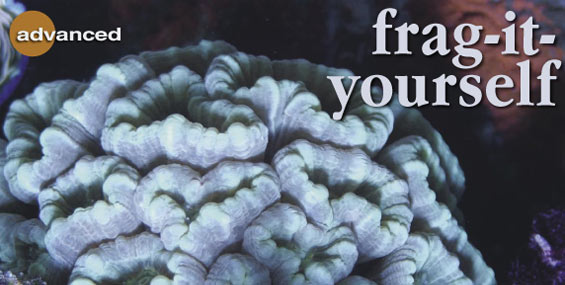 How to Propagate Your Own Coral Frags at Home