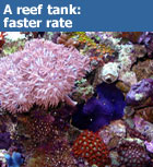 A reef tank requires a faster flow rate