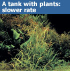 A planted tank requires a slower flow rate