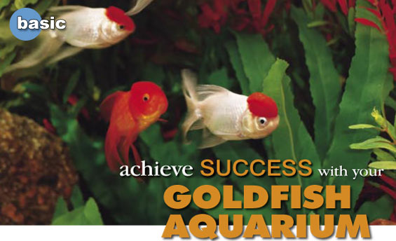 Setting Up An Aquarium How To Set Up A Proper Goldfish Aquarium