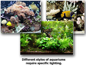Different Aquarium Styles Require Specific Lighting