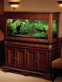 How To Choose The Right Aquarium Avoid Common Costly