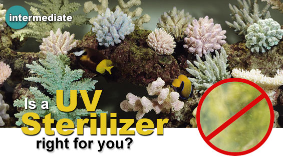 Aquarium Water Quality & Algae Control: Introduction to Aquarium UV Sterilizers