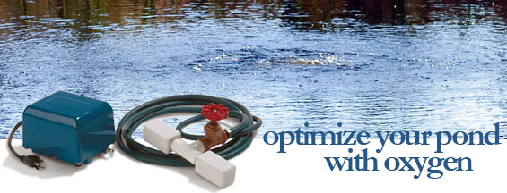 How to maintain proper pond oxygen content in your pond