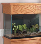 Setting up the Aquarium Correctly
