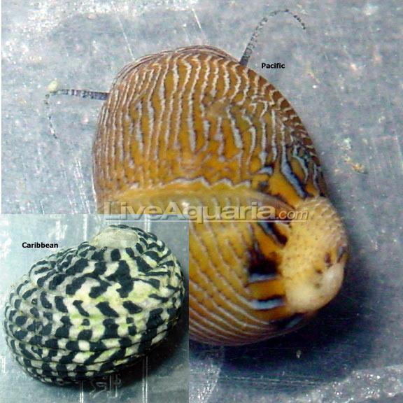 lg-80437-snail.jpg