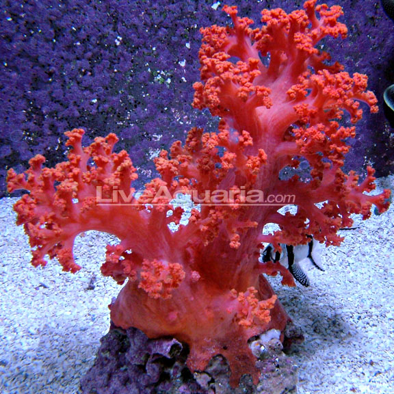 Flower Tree Coral Red Orange