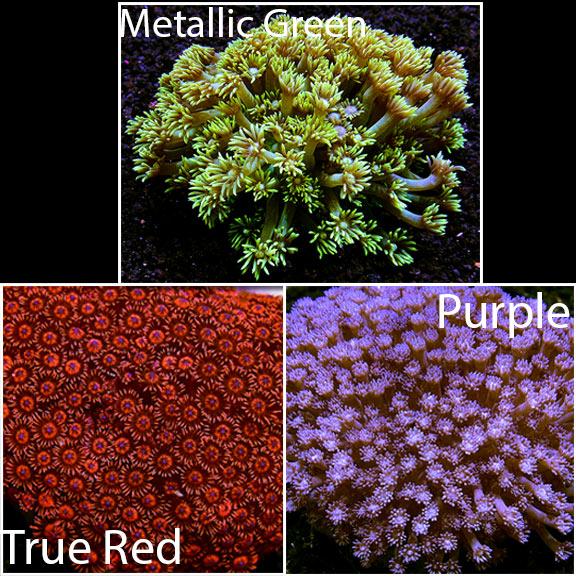 Flower pot coral mightylinksfo