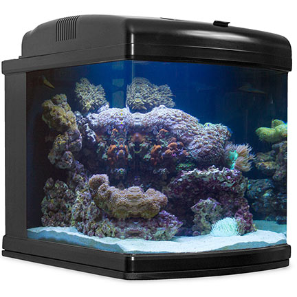 liveaquaria approved aquatic supplies 28g nano cube wifi. Black Bedroom Furniture Sets. Home Design Ideas