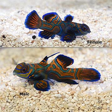 Biota Fish