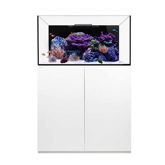 WATERBOX REEF 100.3 WHITE