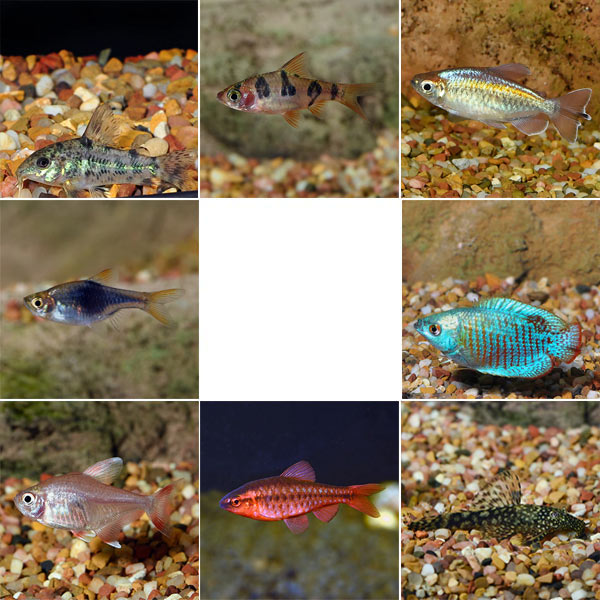 Aquatic Life Pack - Freshwater Fish
