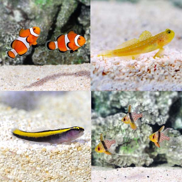 Aquatic Life Pack - Marine Fish