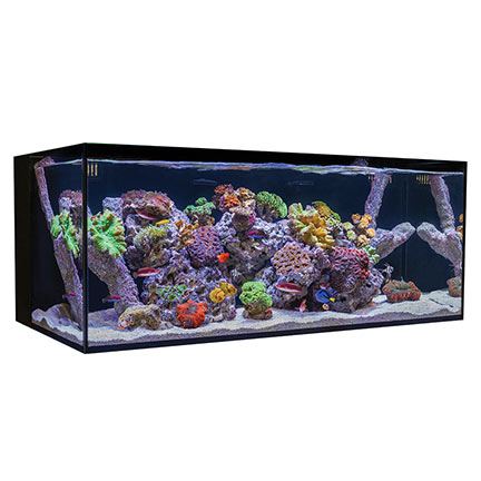 Liveaquaria Approved Aquatic Supplies Cobalt Aquatics C
