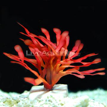 Mammillarus gracilaria algae for Red algae in fish tank
