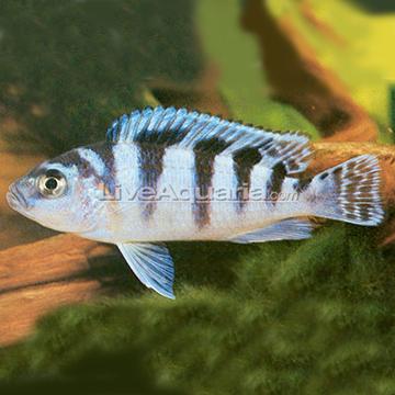 Aquarium Forum New Fish Identification Plz