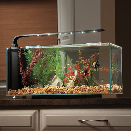 Liveaquaria approved aquatic supplies jbj flat panel for Desktop fish tank
