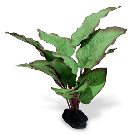 Azoo Real Plant Artificial Anubias