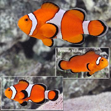 Select ORA® Fish