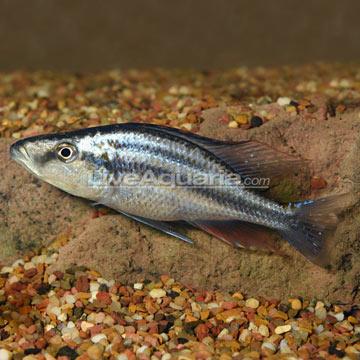 marine fish compatibility chart pdf