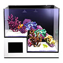 Innovative Marine NUVO Concept  Drop-Off Panorama Aquarium