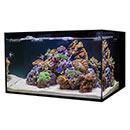 Cobalt Aquatics 18 Gallon C-Vue Aquarium Kit