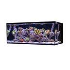 Cobalt Aquatics 40G C-Vue Aquarium