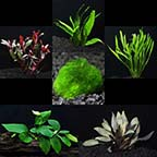 Aquatic Life Pack - 26 Gallon Freshwater Plant