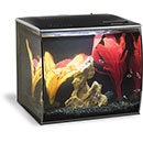 Fluval Flex Complete Aquarium Kit - 9 Gallon, Black, Freshwater (Orange/Red Decor)