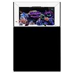 WATERBOX REEF 100.3 BLACK