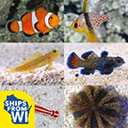LiveAquaria® Premium Reef Safe Aquatic Life Packs