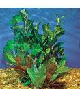 Hagen Marina Silk Plant Variety Pack