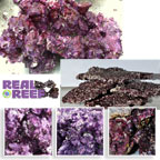 """Real Reef"" Eco Friendly Live Rock - Fully Cured"