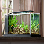 Fluval Spec V 5 Gallon Desktop Aquarium Kit