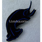 Blue Velvet Nudibranch