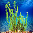 "Marineland 6""-18""Artificial Plant ""A"" Multi-Packs"