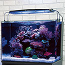 JBJ Rimless Aquariums
