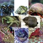 Caribbean Reef Diversity Pack
