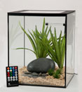 Current SOLO Desktop Aquarium