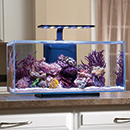 JBJ Rimless Desktop Aquarium