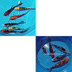 Domestic Koi Packs