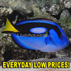 Everyday LOW PRICE Favorites!
