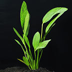 Freshwater Plant Specials