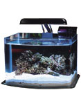 Picotope 3 Gallon Aquarium Kit