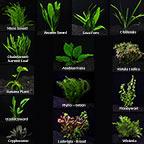 Aquarium Plant Pack - Mega