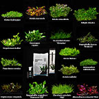 Tropica® 1-2-Grow! Advanced Care Plant Packs