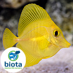 Biota Captive-Bred Fish
